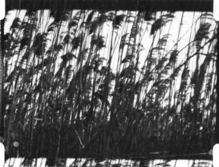 Frampton-ZornsLemma(Y)
