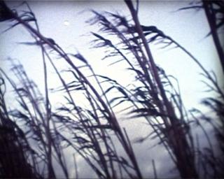 paisagem-image-1